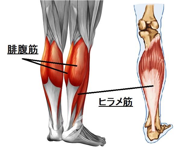 下腿三頭筋(ふくらはぎ)を太くする方法を、ガチのボディビルダーで ...